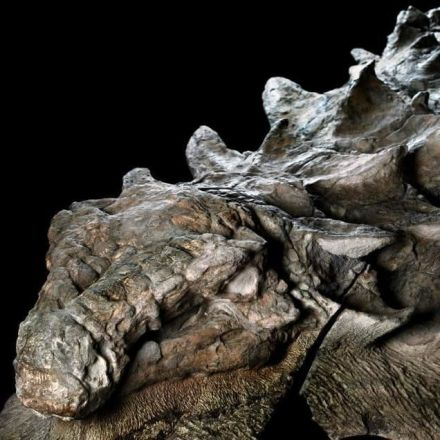 This Is the Best Dinosaur Fossil of Its Kind Ever Found