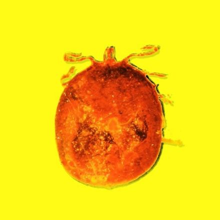 The Scientist Who Stumbled Upon a Tick Full of 20-Million-Year-Old Blood