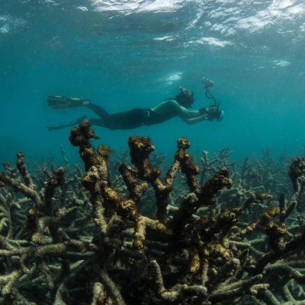 Huge coral bleaching event warns of global devastation, study suggests