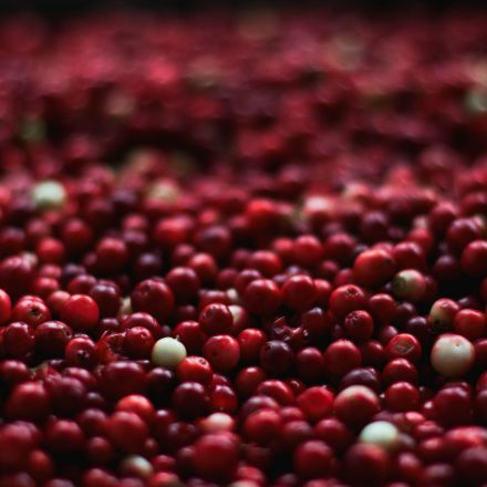 To keep the cranberry industry in its birthplace, a farm turns to drones, data, and automation