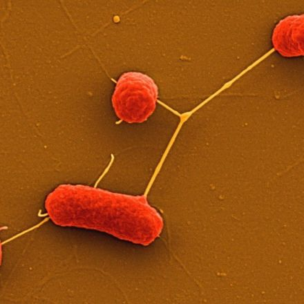 Resistance to the Antibiotic of Last Resort Is Silently Spreading