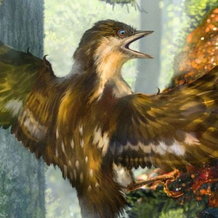 Ancient Birds' Wings Preserved in Amber