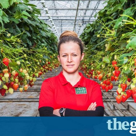 Brexit and the coming food crisis: 'If you can't feed a country, you haven't got a country'