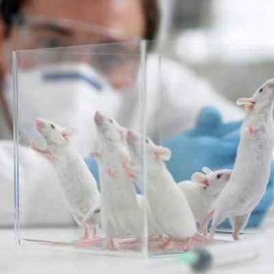 Scientists reverse ageing in mammals and predict human trials within 10 years