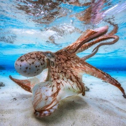 The Winning Photos of Underwater Photographer of the Year 2017