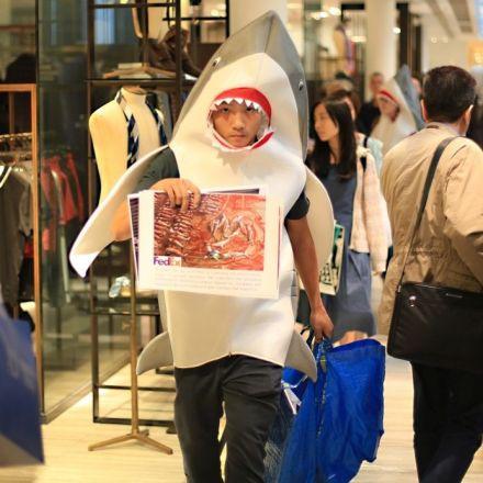 FedEx slammed for 'lack of sincerity' in banning shark fin shipments