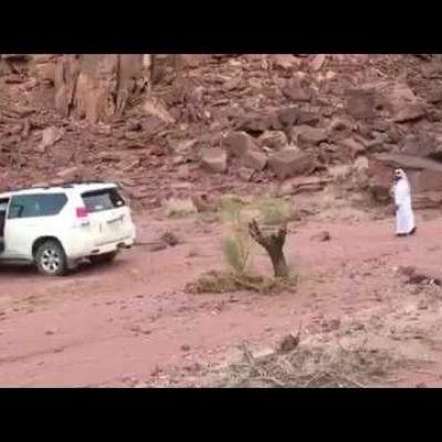 Revenge of the tree