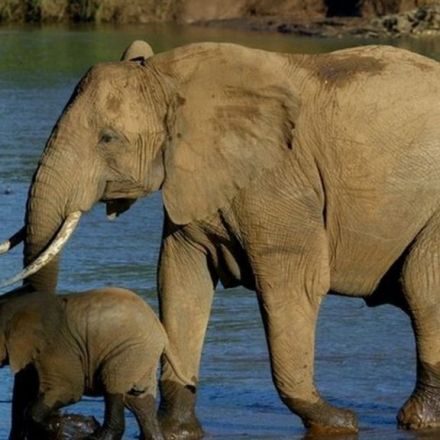 China announces ban on ivory trade by end of 2017