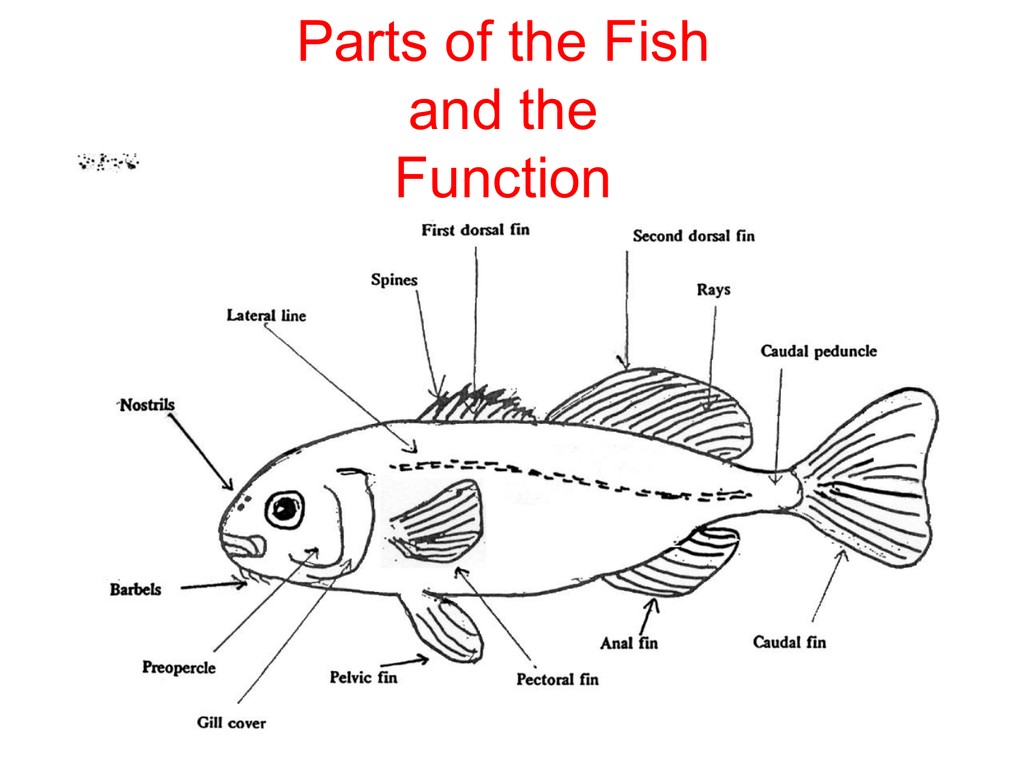 Parts Of Fish Function