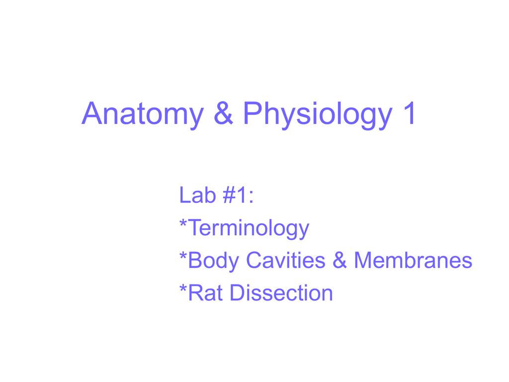 A Amp P Lab 1 Rat Dissection