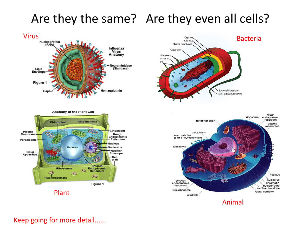 Virus Thingy Cell