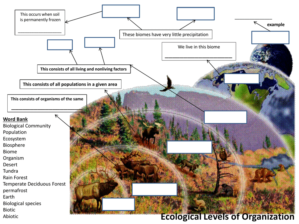 Ecology Concept Maps Answers