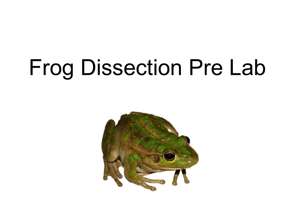 Frog Dissection Pre Lab