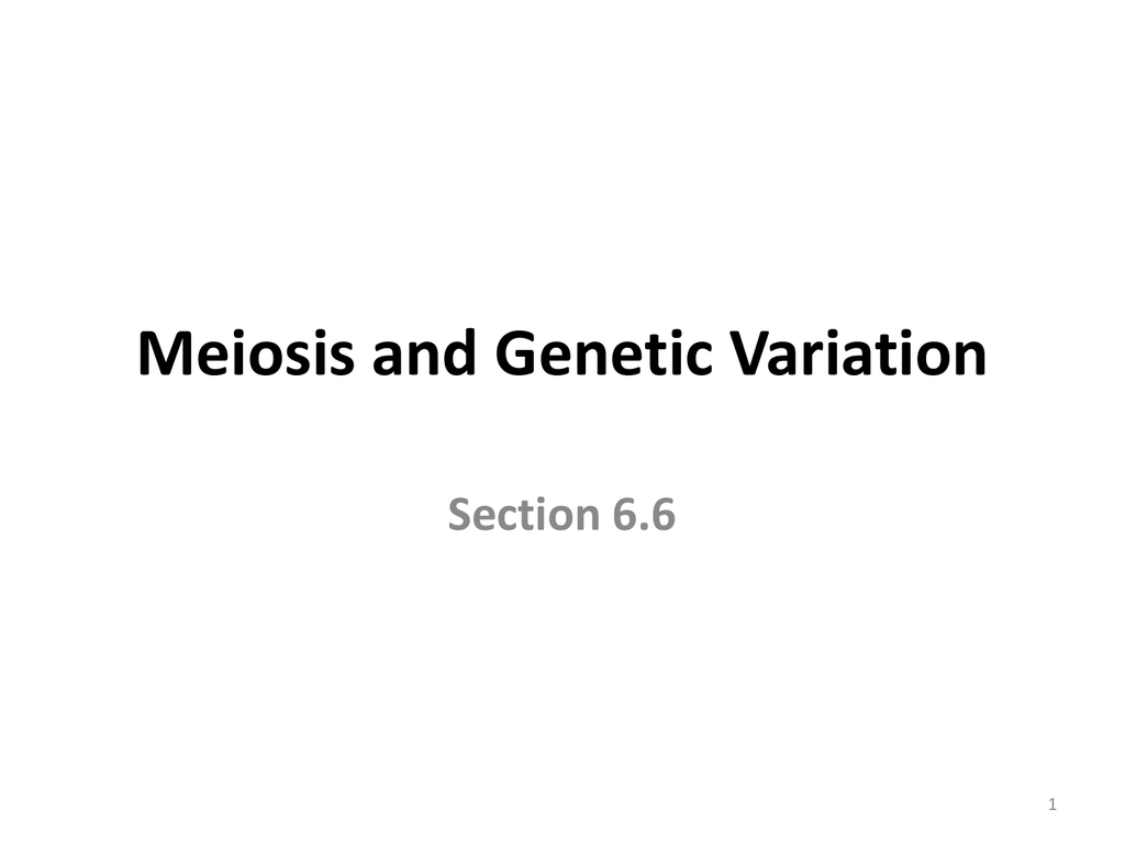 Section 6 6 Meiosis And Genetic Variation