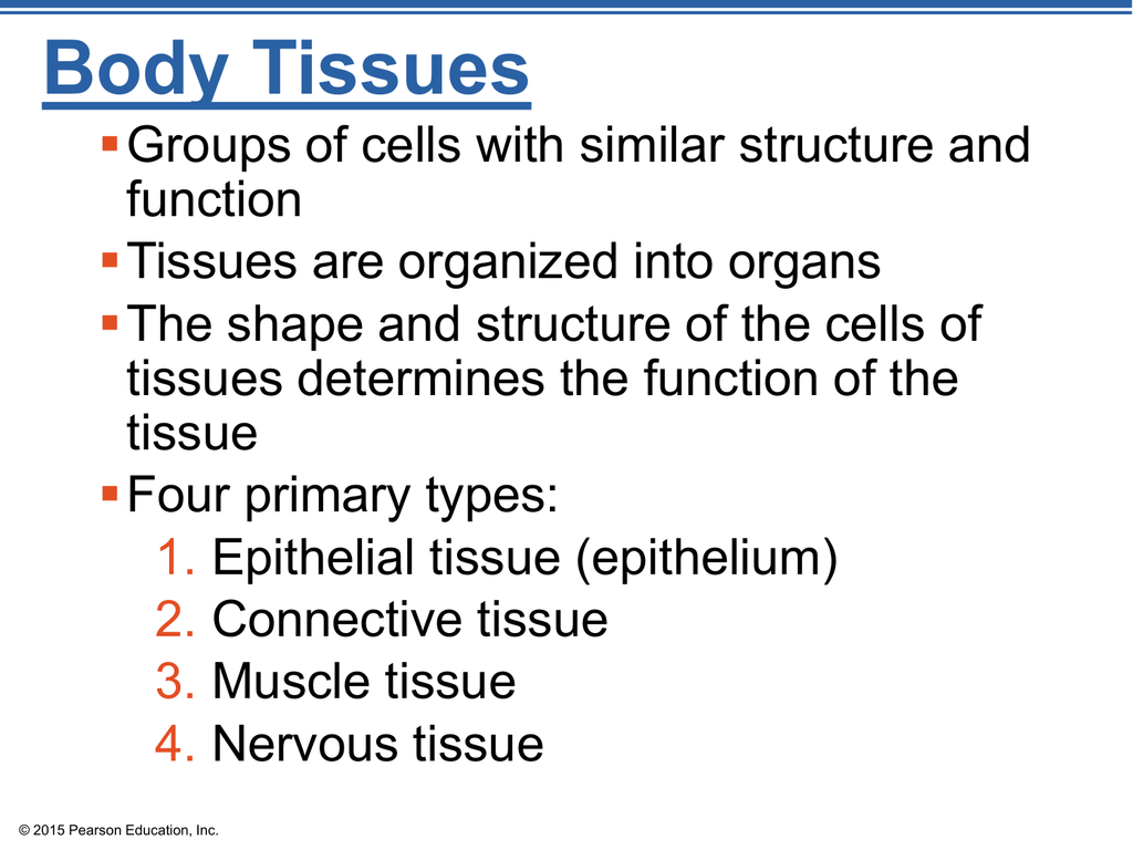 Chapter 3 Part 2 Body Tissues Ppt