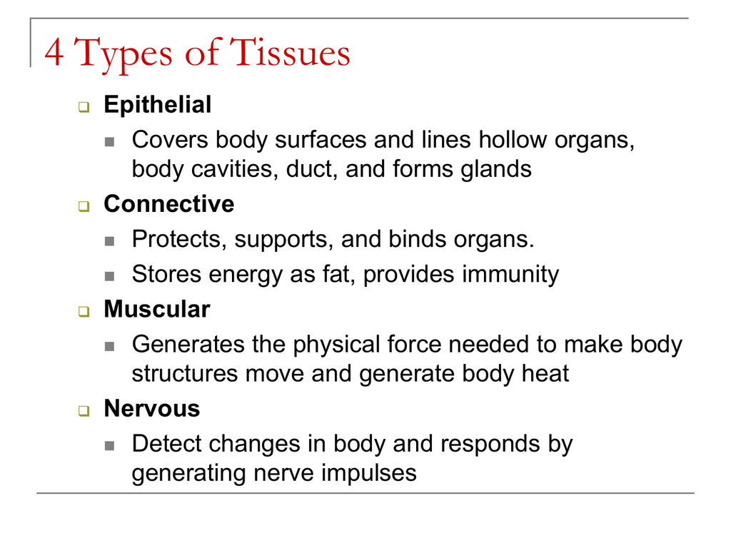 4 Types Of Tissues