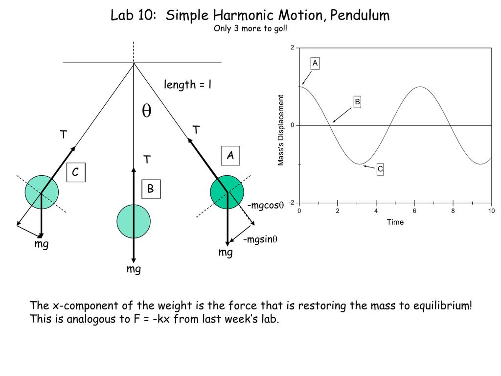Lab 10 Simple Harmonic Motion Pendulum
