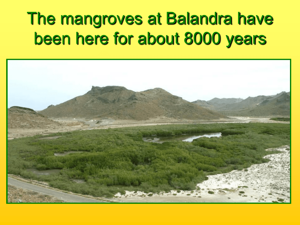 The Mangroves At Balandra Have Been Here For About Years