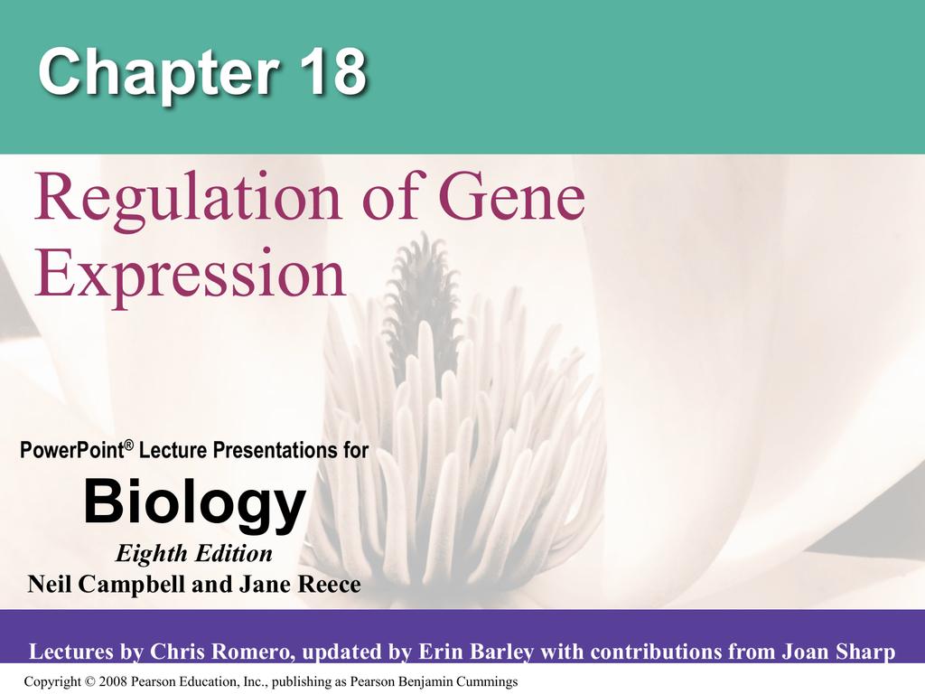 Regulation Of Gene Expression Chapter 18 Biology