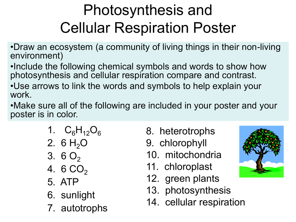 Compare The Chemical Equations For Photosynthesis And Cellular Respiration