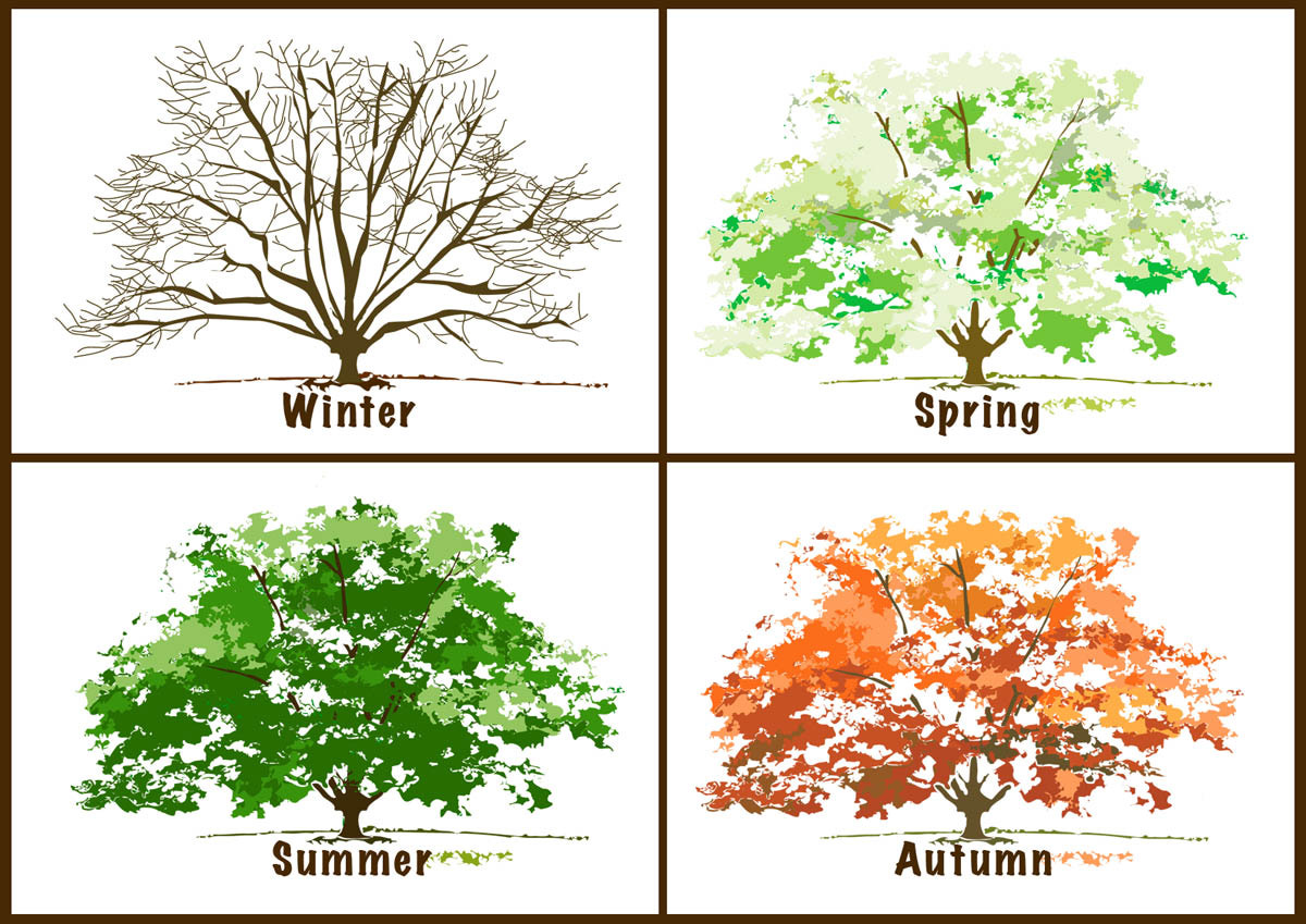 Image result for the seasons