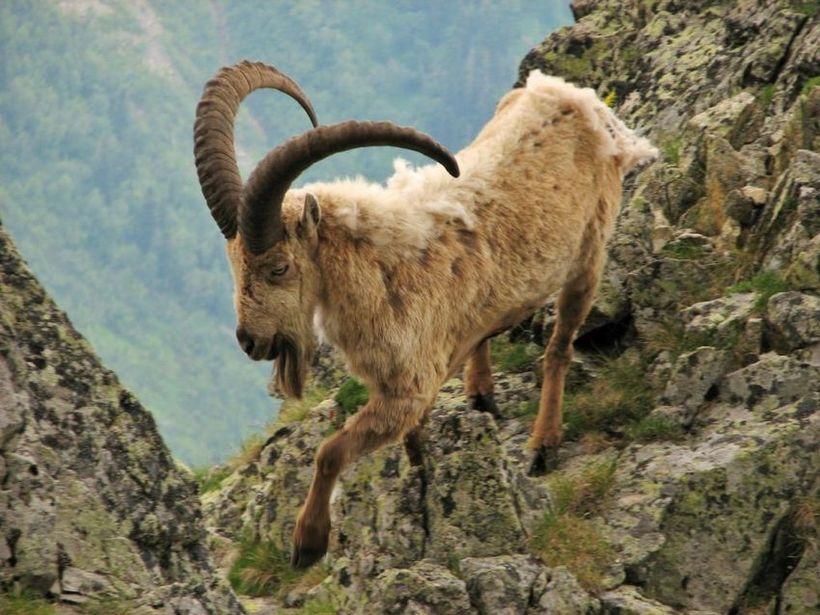 Описание природы кавказа