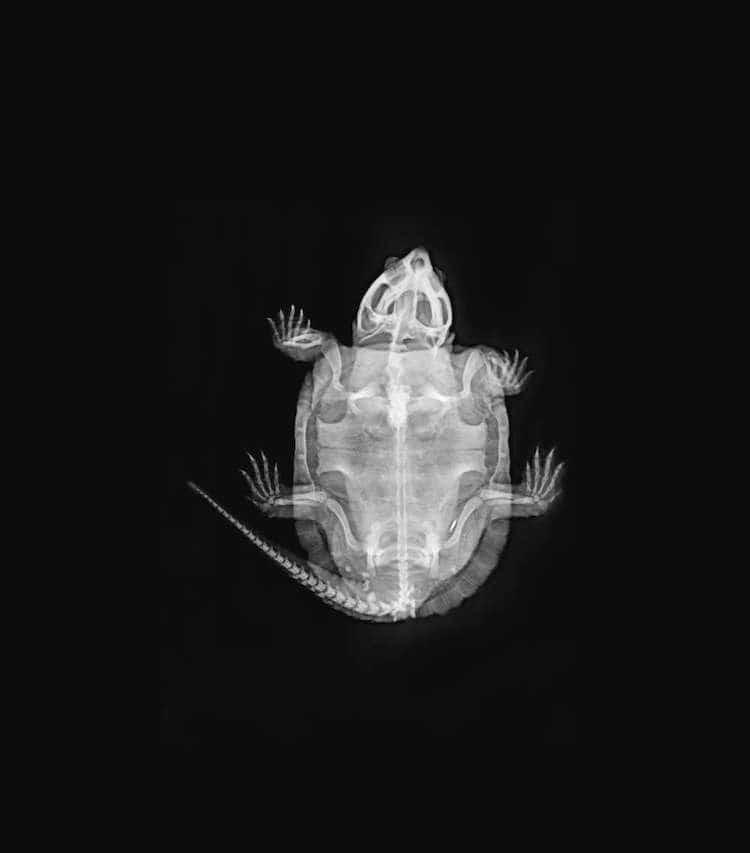 Лондонский зоопарк опубликовал захватывающие рентгеновские снимки своих животных