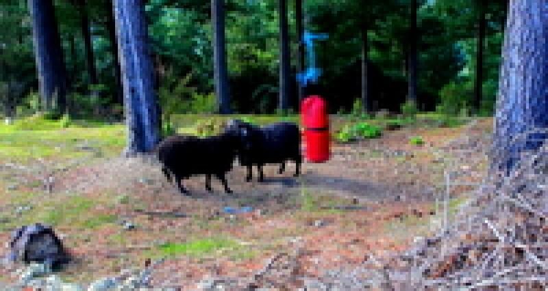 Видео: Что случится, если оставить в лесу боксерскую грушу