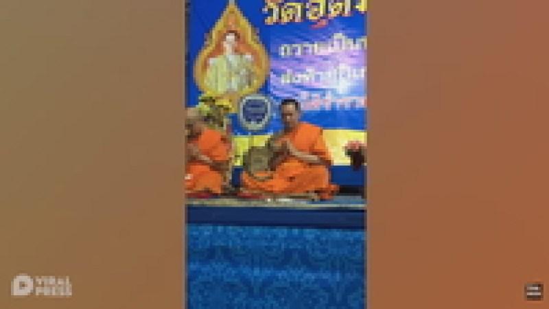 Видео: В Таиланде назойливая кошка не дала монаху нормально помедитировать