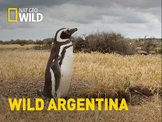 Wild Argentina – NatGeo (2017) [3/3] [HDTV1080p]