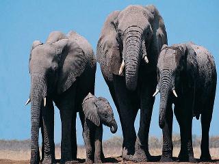 Relatos de Zambia: El valle de los elefantes (2017)