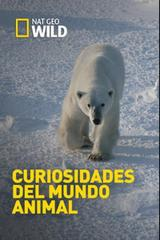 Osos polares, perros y mantis marinas [2015] [Curiosidades del mundo animal] [NatGeo] [HDTV 1080p]