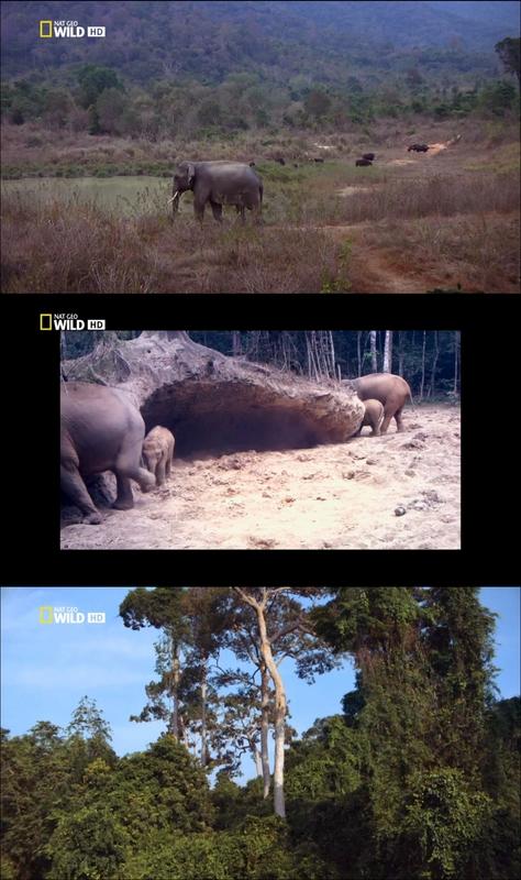 Tailandia Salvaje [2012][2/2][NatGeo][HDTV 720p]