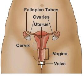 Cara Melancarkan Menstruasi