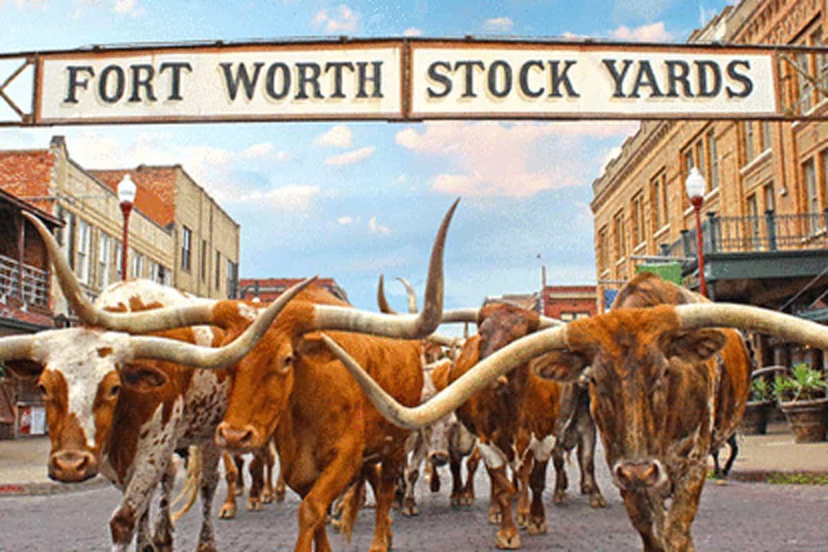 Stockyards Scavenger Hunt