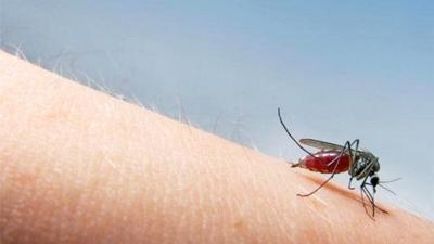7 Cara Mengobati Malaria, Gejala, Penyebab dan Bahayanya