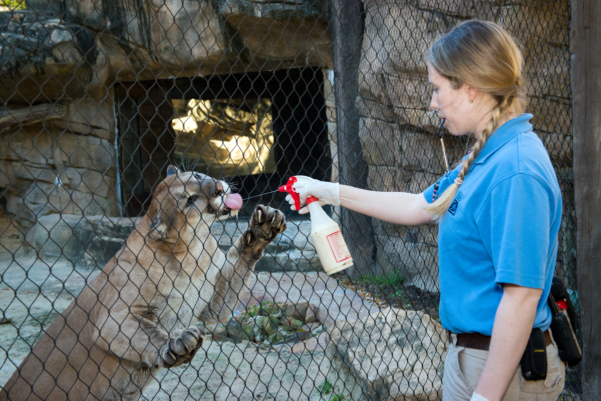 Houston Zoo Lights Hours
