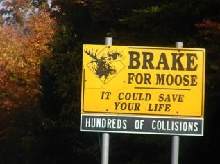 02-moose