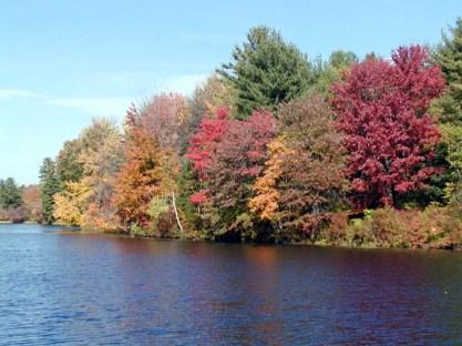 3-trees-river.jpg