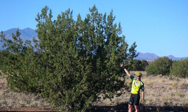 Gray Mountain to Flagstaff