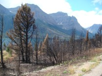 Riding through burned forest