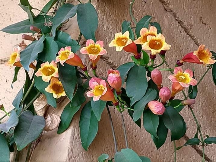 3.30 flowers le buzz