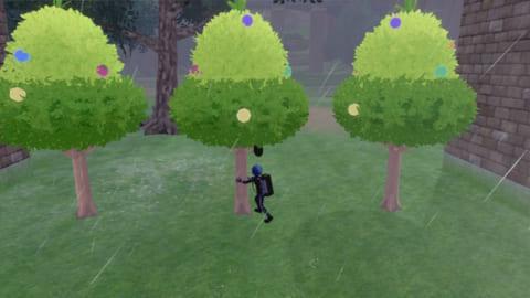 きのみの木