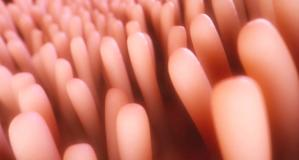 広島で発見!腸内の免疫組織の異常が、花粉症やアレルギーと一緒に起こっていたの写真