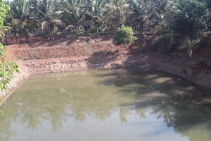 The farm pond used to help irrigate the crop. Credit: Special arrangement