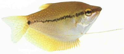 cá là nguồn cung cấp ni-tơ chính trong hồ thủy sinh