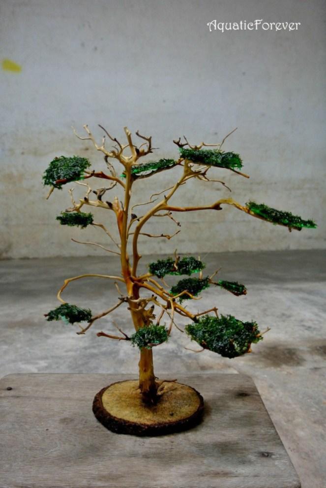 buộc rêu lên cây bonsai