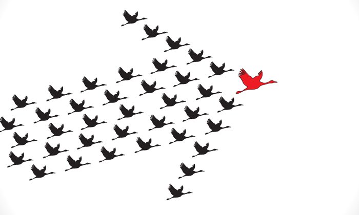 quotes about leadership, flying ducks in an arrow