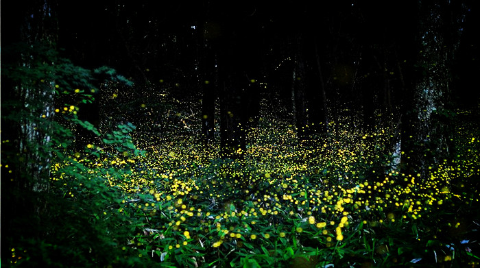 Image result for Mangrove Firefly Pontoon Tour (Night only) canopi
