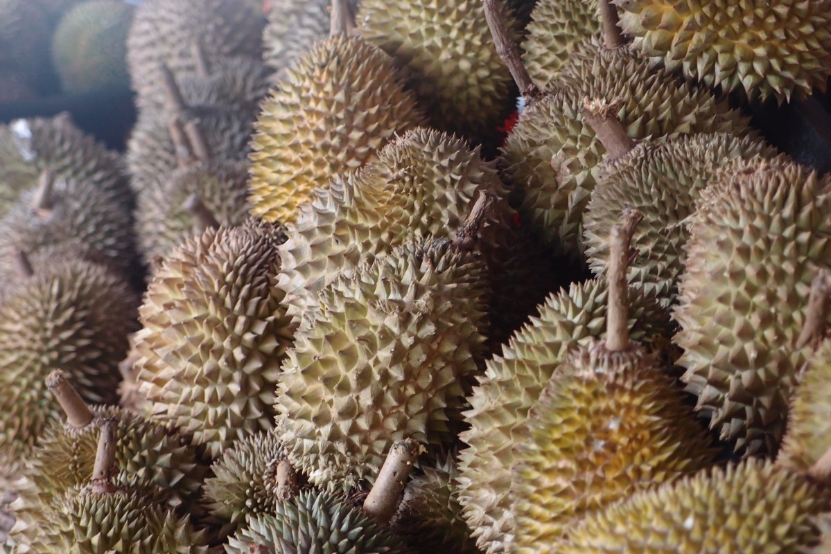 review-taste-test_durian-fever_durians-galore_02